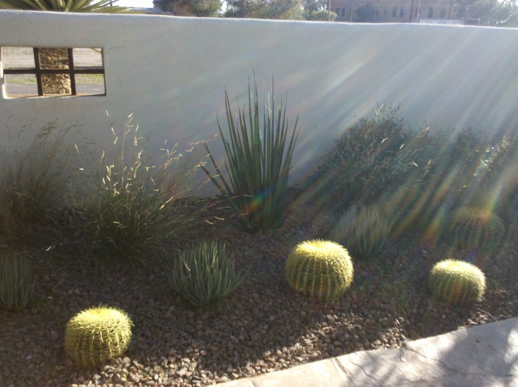Barrel cacti in cactus garden at Capt Shepard House of Gage Hotel.  This cactus garden was really beautiful, but then I'm very partial to desert gardens! :)