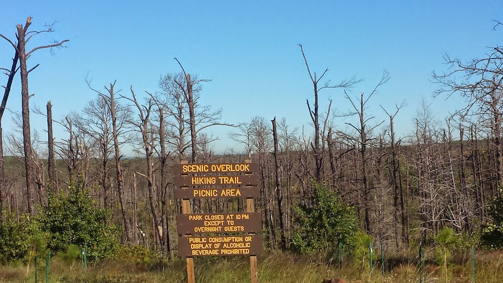 3 years ago there was a forest fire that burnt all of the pine tress in Bastrop State Park - it will probably take decades for it to return to what it was before the fire.