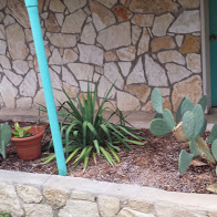Cactus garden at Diamond H B&B near Bandera, TX.