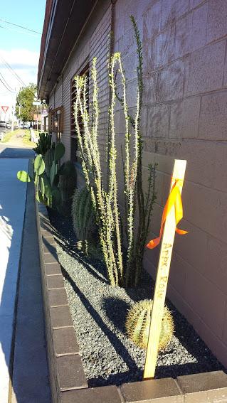 Ocotillo barrel cactus and prickly pear cactus in Salty Sow restaurant garden.