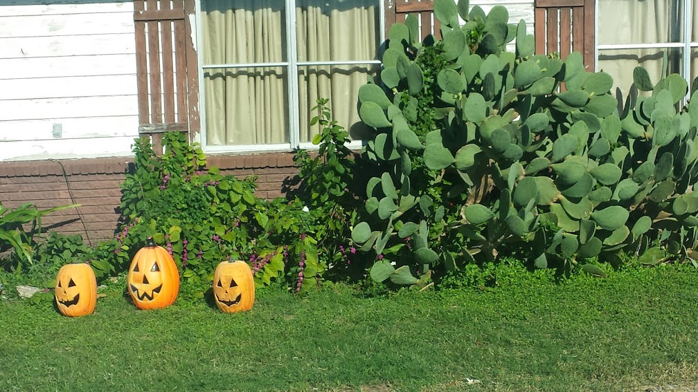 What could possibly go better than pumpkins and prickly pear cactus? Everyone's front lawn should be so adorned this time of year, don't you think?