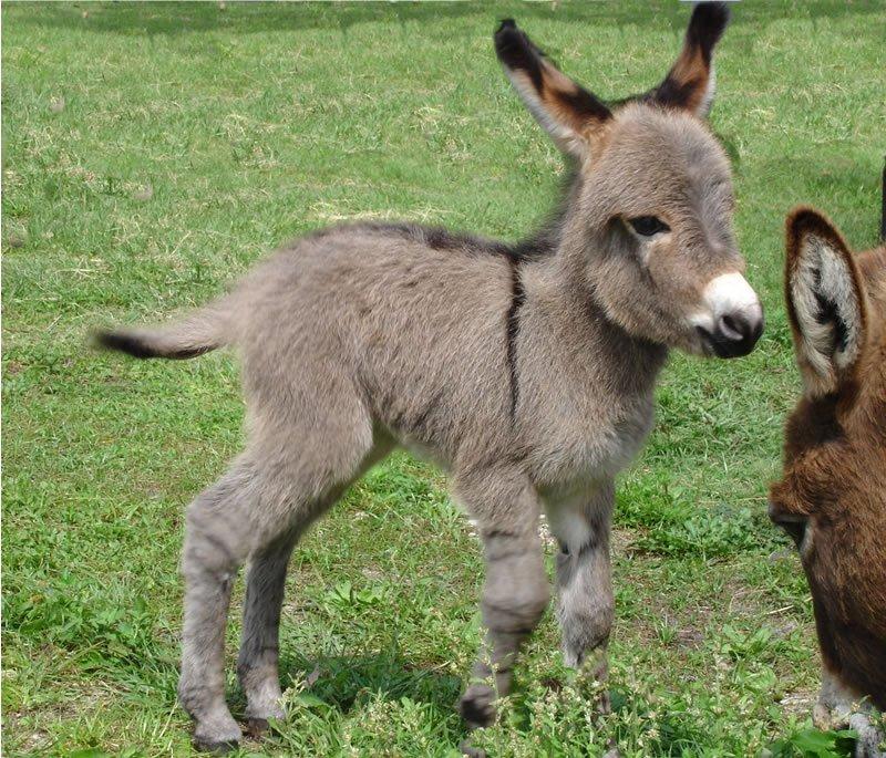 donkey101